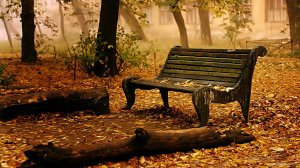 lonely-bench-and-a-log (1)