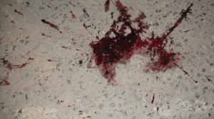 Blood_stain_of_the_civet