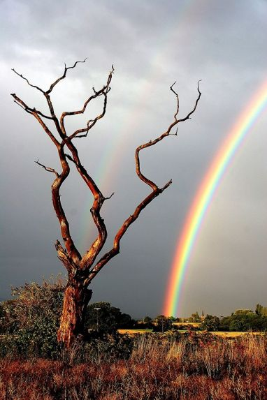 tree and rainbow