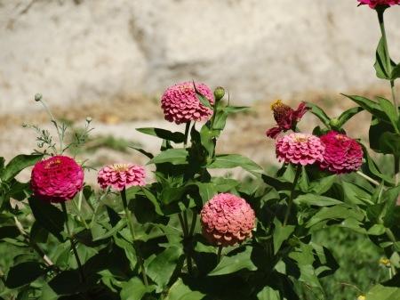 elizabeth-gibson-france-flowers-2