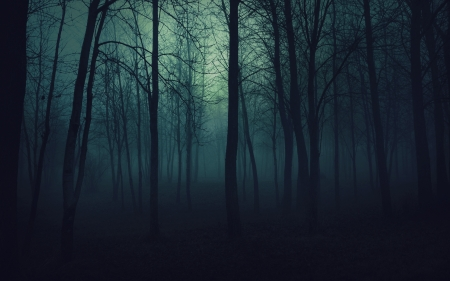 wood_trees_gloomy_fog_haze_darkness_50175_2560x1600