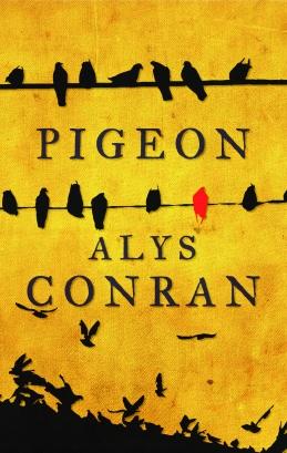 pigeon-_hires