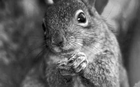 squirrel-whiskers-paws