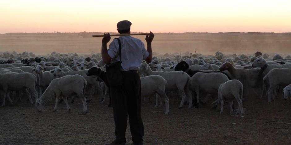 The-Shepherd2