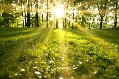 spring-news-winkfield